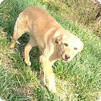 Adopt A Pet :: Samantha - Lancaster, OH