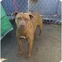 Adopt A Pet :: Cheyenne - Chicago, IL