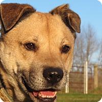 Adopt A Pet :: Sanchez - Pleasant Plain, OH