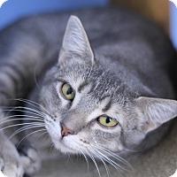 Adopt A Pet :: Gerriette - Chicago, IL