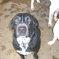 Adopt A Pet :: Tootsie - Nashville, GA