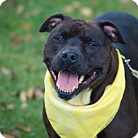 Adopt A Pet :: Juicy*ADOPTED!* - Chicago, IL