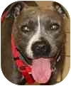 Terrier (Unknown Type, Medium) Mix Dog for adoption in Eatontown, New Jersey - Bella