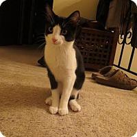 Adopt A Pet :: Maya - Eagan, MN
