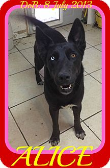 German Shepherd Dog Mix Dog for adoption in Halifax, Nova Scotia - ALICE