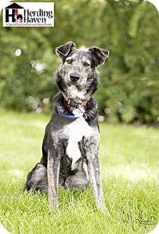 Australian Cattle Dog/Catahoula Leopard Dog Mix Dog for adoption in Salt Lake City, Utah - Jack