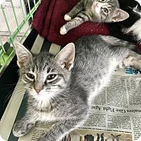 Adopt A Pet :: Tobis - Island Park, NY