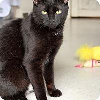 Adopt A Pet :: Sunny - McCormick, SC