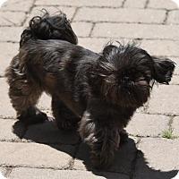 Adopt A Pet :: Rorie - Mechanicsburg, PA