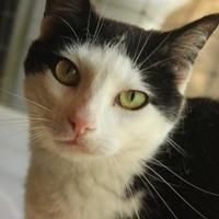 Adopt A Pet :: Tuesday - Ravenel, SC
