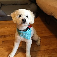 Adopt A Pet :: Frisco - Troy, MI