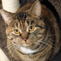 Adopt A Pet :: Torie - Rochester, MN