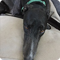 Adopt A Pet :: PJ Extraordinary - Canadensis, PA