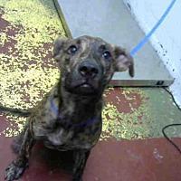 Adopt A Pet :: MUSHROOM - Atlanta, GA
