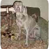 Adopt A Pet :: Gracie  **ADOPTED** - Eustis, FL
