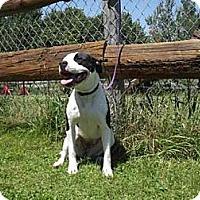 Adopt A Pet :: Sabrina - Phillips, WI