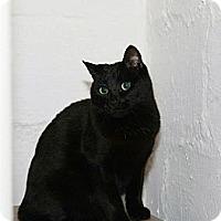 Adopt A Pet :: Harley - Syracuse, NY