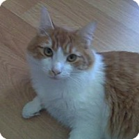 Adopt A Pet :: Herbie The Love Bug - Easley, SC