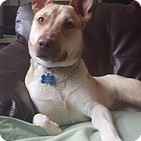 Adopt A Pet :: Precious - Hamilton, ON