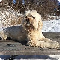 Adopt A Pet :: Kevin - Hamilton, ON