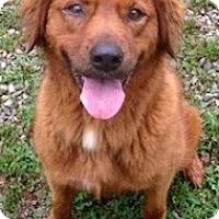 Adopt A Pet :: Jules - Knoxvillle, TN