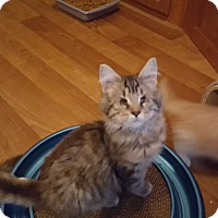 Adopt A Pet :: 1Harley - Delmont, PA