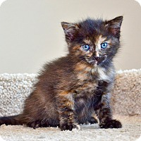 Adopt A Pet :: Spice - Davis, CA