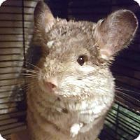 Adopt A Pet :: Bernard - Patchogue, NY