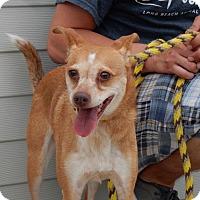 Adopt A Pet :: Charley Girl - Long Beach, NY