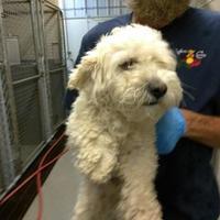Adopt A Pet :: 35964778 - Los Lunas, NM