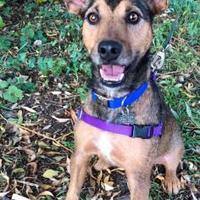 Adopt A Pet :: Jasper - Fort Collins, CO