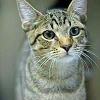 Adopt A Pet :: 10312093 - Brooksville, FL