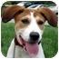 Photo 1 - Labrador Retriever Mix Puppy for adoption in Overland Park, Kansas - Hanna