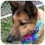 Photo 3 - Collie/Shepherd (Unknown Type) Mix Dog for adoption in Cincinnati, Ohio - Austin