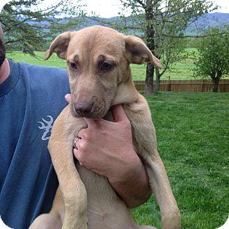 Labrador Retriever Mix Dog for adoption in Westport, Connecticut - Lowa-Aka Wiggle Butt
