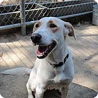 Adopt A Pet :: Willow - Killian, LA