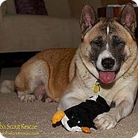 Adopt A Pet :: Megumi - Centennial, CO