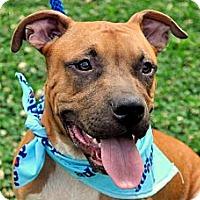 Adopt A Pet :: Rugger - Houston, TX