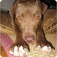 Adopt A Pet :: Nina - Reisterstown, MD