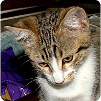 Adopt A Pet :: 1 Sparklets - Dallas, TX