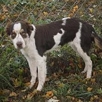 Adopt A Pet :: TN/Addy - Erie, PA