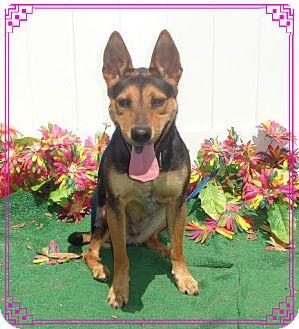 German Shepherd Dog/Australian Cattle Dog Mix Dog for adoption in Marietta, Georgia - TRINITY