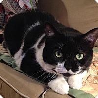 Adopt A Pet :: Chloe - Toronto, ON