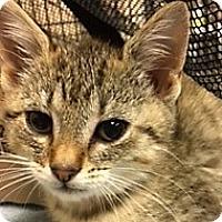 Adopt A Pet :: Whitney - Medina, OH
