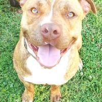Adopt A Pet :: Sparky - Selma, CA
