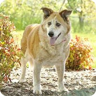Mixed Breed (Large)/Shepherd (Unknown Type) Mix Dog for adoption in Salem, Oregon - Honey
