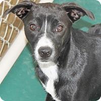 Adopt A Pet :: Jurie - Hooksett, NH