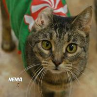 Adopt A Pet :: Nema - Niagara Falls, NY