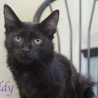Adopt A Pet :: Freddy - Bradenton, FL
