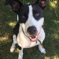 Adopt A Pet :: Murron - DeSoto, IA